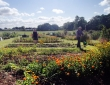Leeswood Allotments
